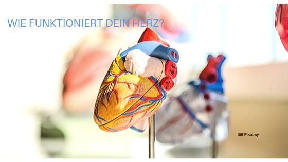 Wie funktioniert Dein Herz